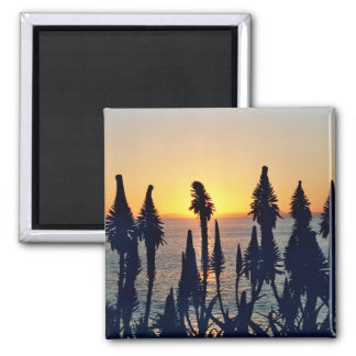 Red Hot pokers sunset magnet