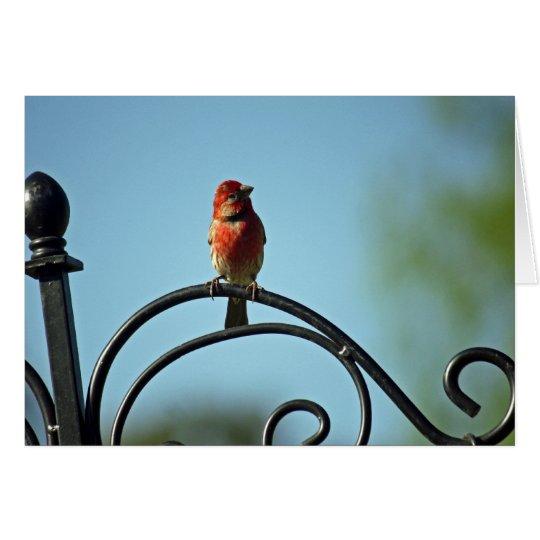 Red House Wren Birthday Greetings Card
