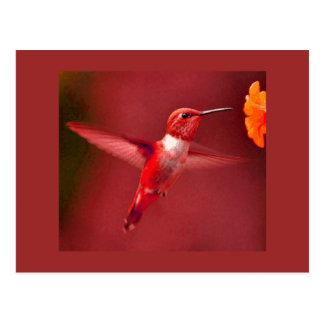 RED HUMMINGBIRD POSTCARD
