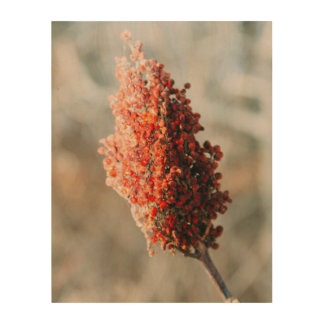 Red in Winter Wood Wall Decor