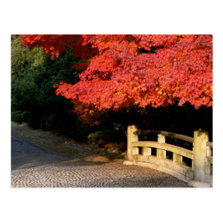 Red Japanese maple Postcard