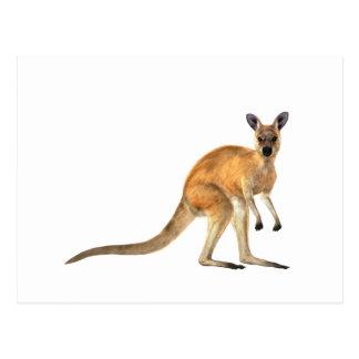 Red Kangaroo In Side View Postcard
