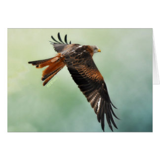 Red Kite in Flight Card