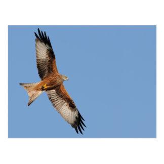 Red Kite Postcard
