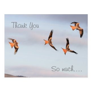 Red Kite Thank You Postcard