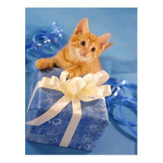 Red kitten with gift postcard