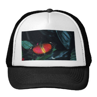 Red lacewing, Asia Mesh Hats