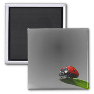 Red Lady Bug On Leaf - B&W Fading Background Magnet