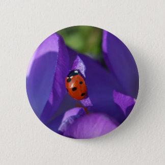 Red ladybird on crocus 2 inch round button