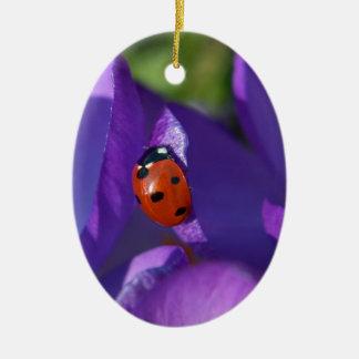 Red ladybird on crocus ceramic oval ornament