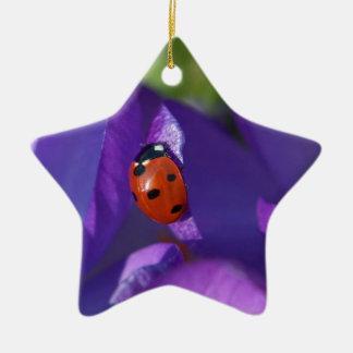 Red ladybird on crocus ceramic star ornament