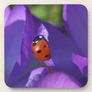 Red ladybird on crocus coaster