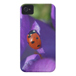 Red ladybird on crocus iPhone 4 covers