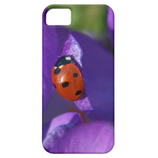 Red ladybird on crocus iPhone 5 case