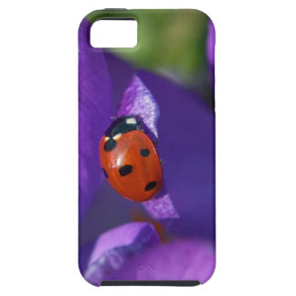 Red ladybird on crocus iPhone 5 cover