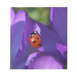Red ladybird on crocus notepad
