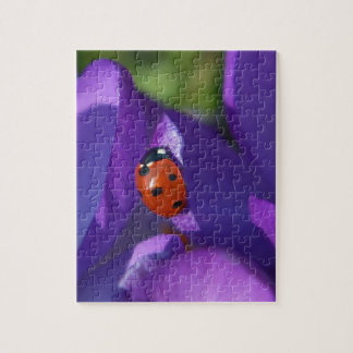 Red ladybird on crocus puzzles