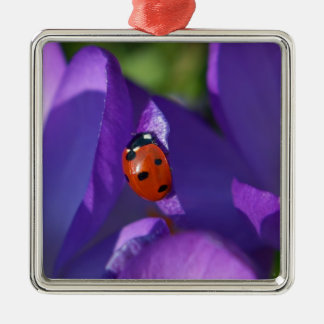 Red ladybird on crocus Silver-Colored square ornament