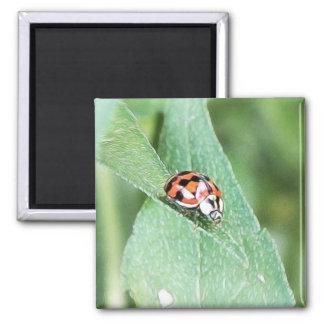 Red Ladybug On A Green Leaf Square Magnet