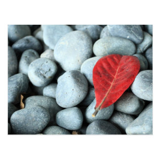 Red leaf and stones postcard