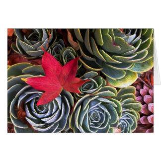 Red Leaf Card