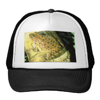 Red legged frog mesh hats