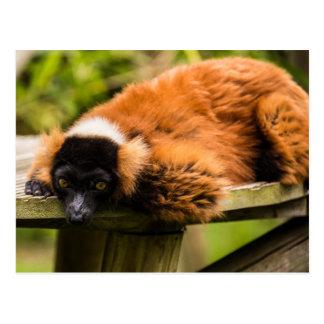 Red Lemur Postcards