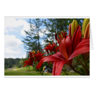 Red Lilies Card
