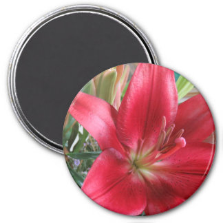Red Lily Magnet