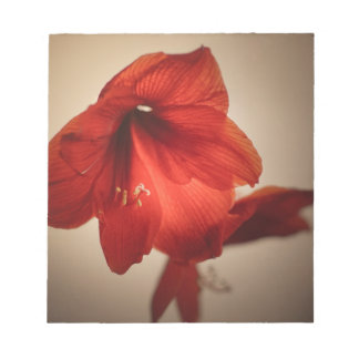 red lily notepad