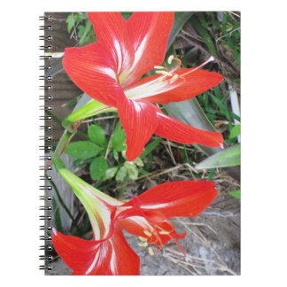 Red Lily Spiral Photo Notebook