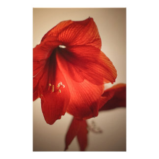 red lily stationery