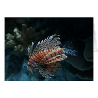 Red Lionfish Card