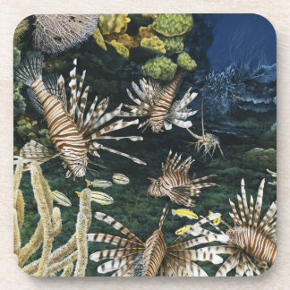 Red Lionfish Coasters