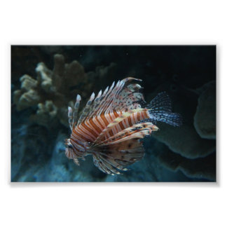 Red Lionfish Photo Print