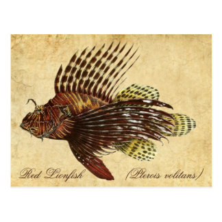 Red Lionfish Postcard