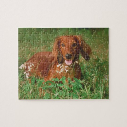 Red Long Haired Dachshund Dog Puzzle
