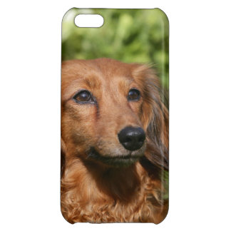 Red Long-haired Miniature Dachshund Case For iPhone 5C