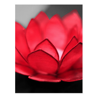 Red Lotus Postcard
