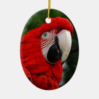 Red Macaw Ceramic Ornament
