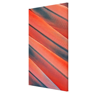 Red Macaw Feather Abstract Canvas Print