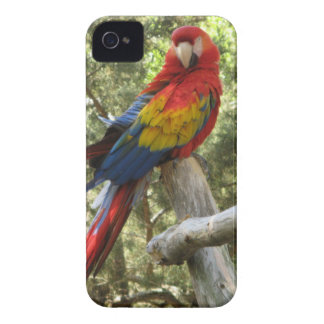 Red Macaw Parrot Case-Mate iPhone 4 Cases