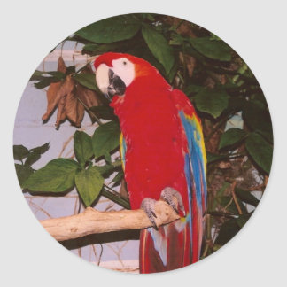 Red Macaw with Leaves Classic Round Sticker