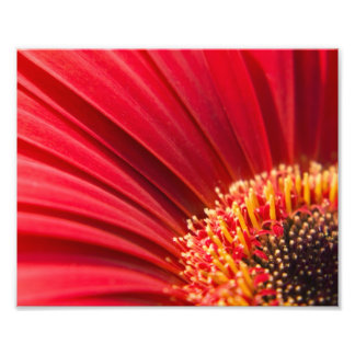 Red Macro Gerbera Daisy Flower Photo Print