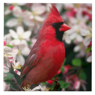 Red Male Cardinal Tile