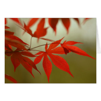 Red Maple Card