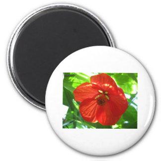 red maple flower 2 inch round magnet