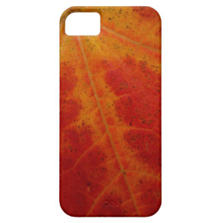 Red Maple Leaf Abstract Autumn Nature Photography Case For The iPhone 5