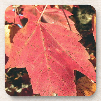 RED MAPLE LEAF IN AUTUMN COASTER