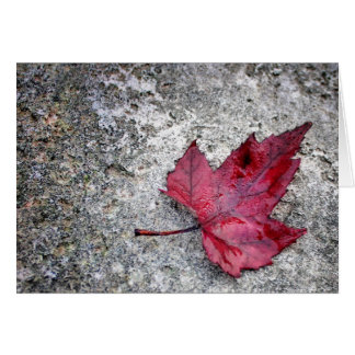 Red Maple Leaf Note Card